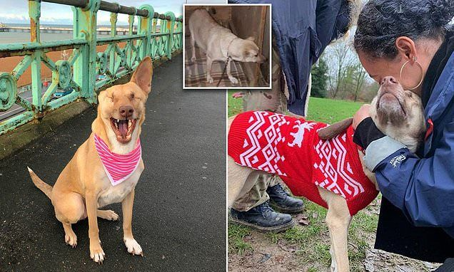 Dog Shot 17 Times Recovers After Being Rescued From Lebanon Dog