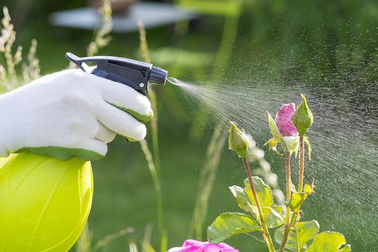 Natural solutions should always be the first weapon for pest control; however there are times when a commercial pesticide is necessary.  These tips are simple, common sense ways to maximize pest control and lessen the environmental impact. #hgtvhomeplants --> http://hgtvhomeplants.com/know-how/entry/pesticide-use-101.html