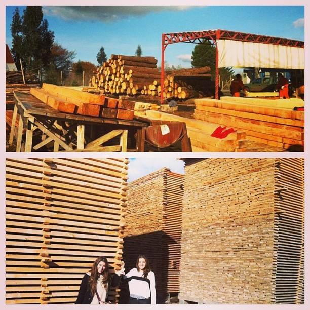 en Temuco buscando maderas