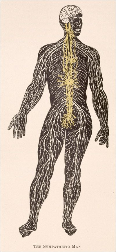116 Best Historical Anatomy Images By National Library Of Medicine