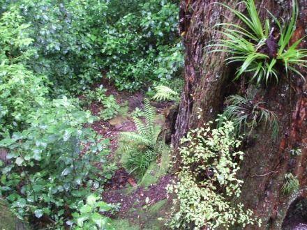New Zealand native flora on Mount Ngongoataha, Rotorua.