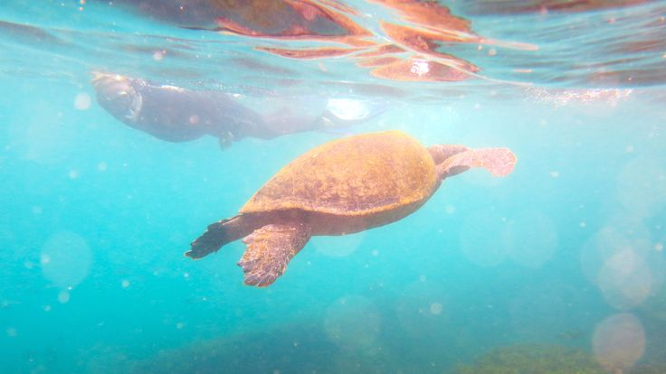 You do get this close - we promise! #gaytravel #outadventures #gaytour #yachtlife #guysthatTravel #OUTinGalapagos https://out-adventures.com/trip/lesbian-and-gay-ecuador-galapagos-gay-cruise/