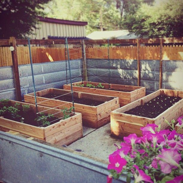 Growing Vegetables In Urban Planters: Best 25+ Urban Gardening Ideas On Pinterest