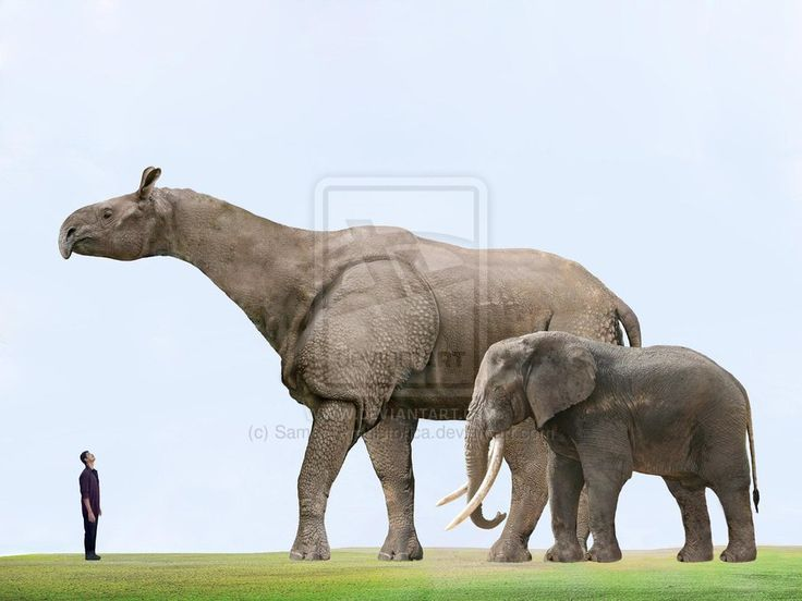 biggest land animal on earth - photo #10