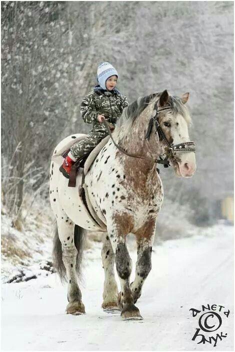 Beautiful #horse (Belgian w/ Appy spots?)
