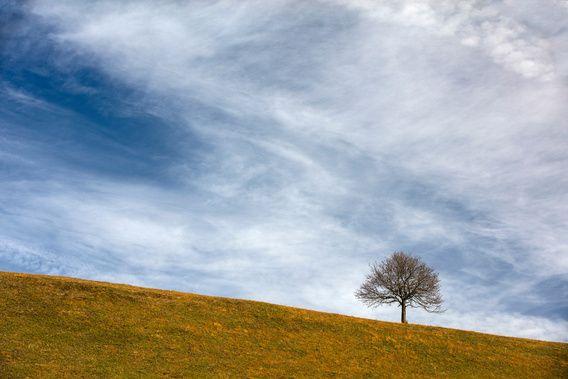 Einsamer Baum - Lone Tree