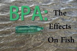 BPA Causing Fertility Problems Throughout Three Generations of Fish