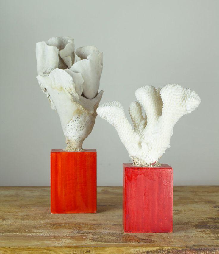 A Pair white corals mounted on lacqued bases.  Coppia di coralli bianchi, montati su una basi realizzate nel laboratorio con le antiche tecniche della gessatura, laccatura e brunitura.    cm 15 X 13 X 34,5 h cm 16 X 9 X 24 h