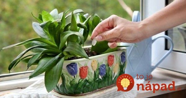 Obyčajné droždie je hotovým zázrakom pre vaše rastlinky. Treba len vedieť, ako…