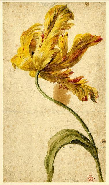 Dutch painter, Jan van Huysum