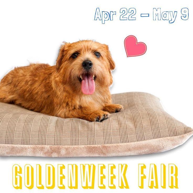 ゴールデンウィークフェア 4月22日 - 5月9日まで。 アンベルソ: www.anberso.com #アンベルソ #犬のベッド #anberso #ノーフォークテリア