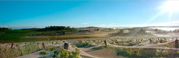 Legana: The gateway to many beautiful vineyards and home to Harcourts West Tamar.