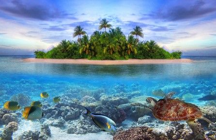 Download Marine life Tropical island 4k wallpaper for free. Come and find more 4k Ultra hd wallpapers of Nature