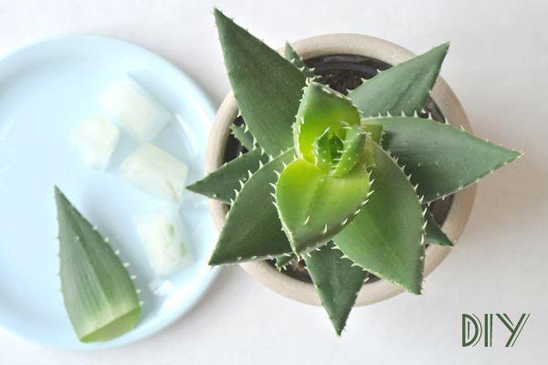 I love eco blog, Druantia, diy, aloë vera, aftersun, zelf maken, natuurcosmetica