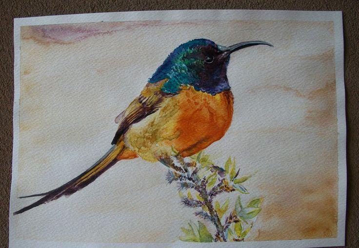 Uccello Colibrì acquerello, dipinto originale, by pupazziconsorriso, 30,00 € su misshobby.com