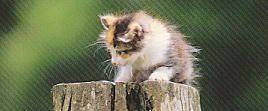 グルーミング&猫の雑学*グルーミングについてご紹介*人気ペットいやし猫 猫の雑学*
