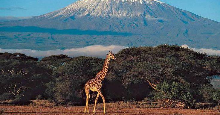 Focus.de - Kilimandscharo, Serengeti und Traumstrände: Warum Tansania zu den schönsten Ländern der Erde gehört - Rundreise in Ostafrika: Tansania