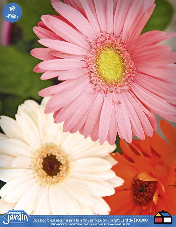 Flores par tu #Jardin