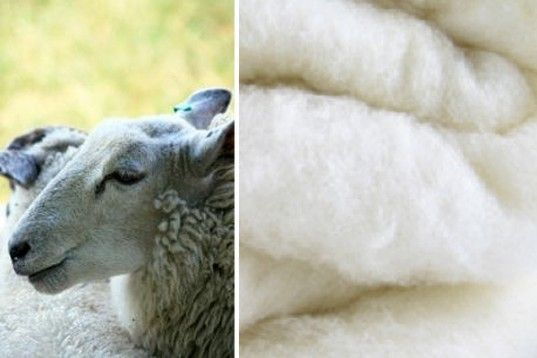 Bellwether Materials – Softbatts Sheep's Wool Insulation, air quality, green building supply, green building materials, Make It Right,healthy home design, sustainable building materials, Cradle to Cradle Institute, Product Innovation Challenge