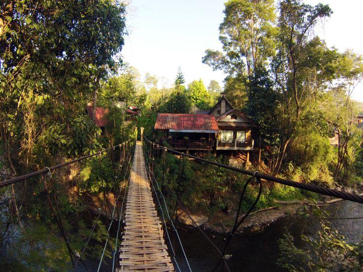 Soppong. Forêt des bambous.