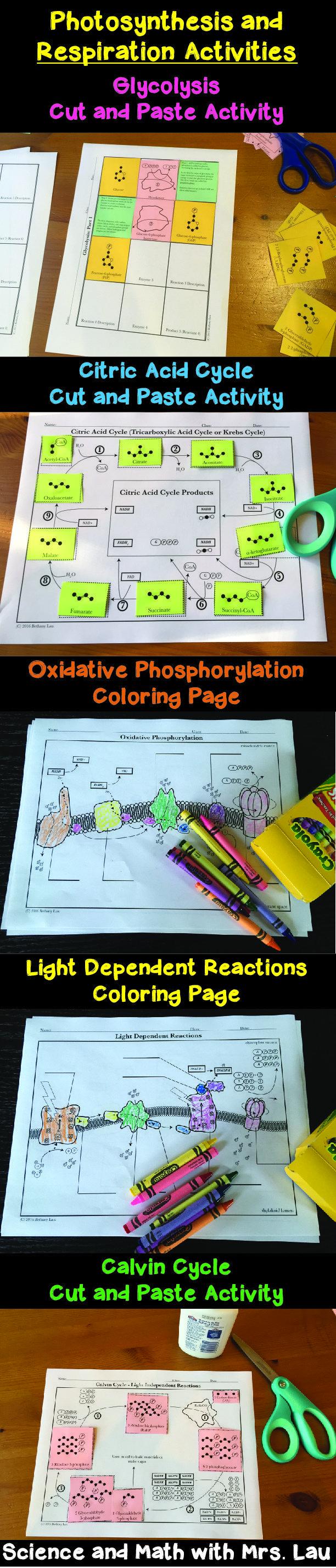 photosynthesis respiration activities