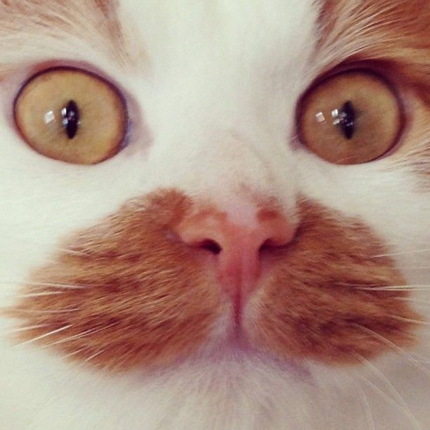 """""""The problem with cats is that they get the exact same look on their face whether they see a moth or an axe murderer."""" --Paula Poundstone"""