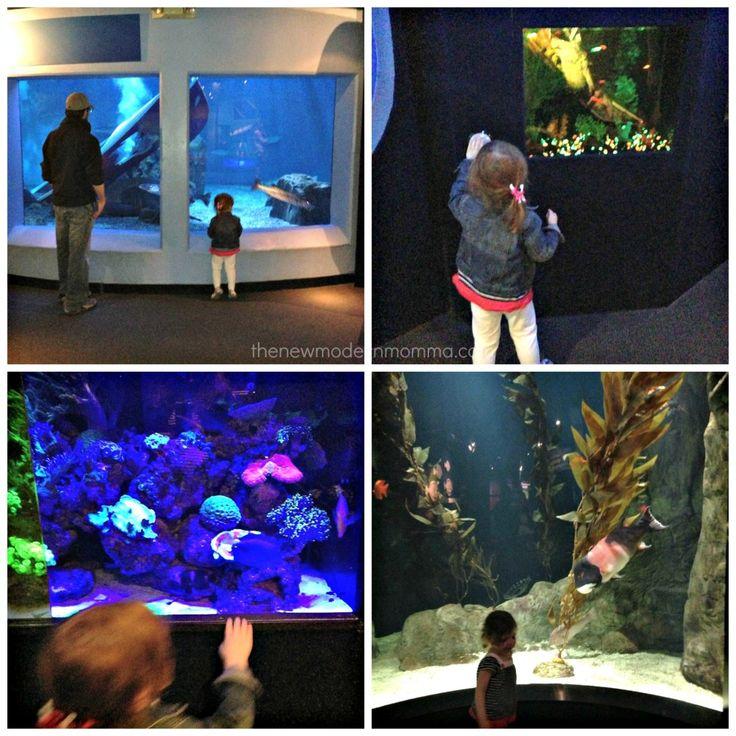 Mystic Aquarium :: Mystic, CT @Mystic Aquarium