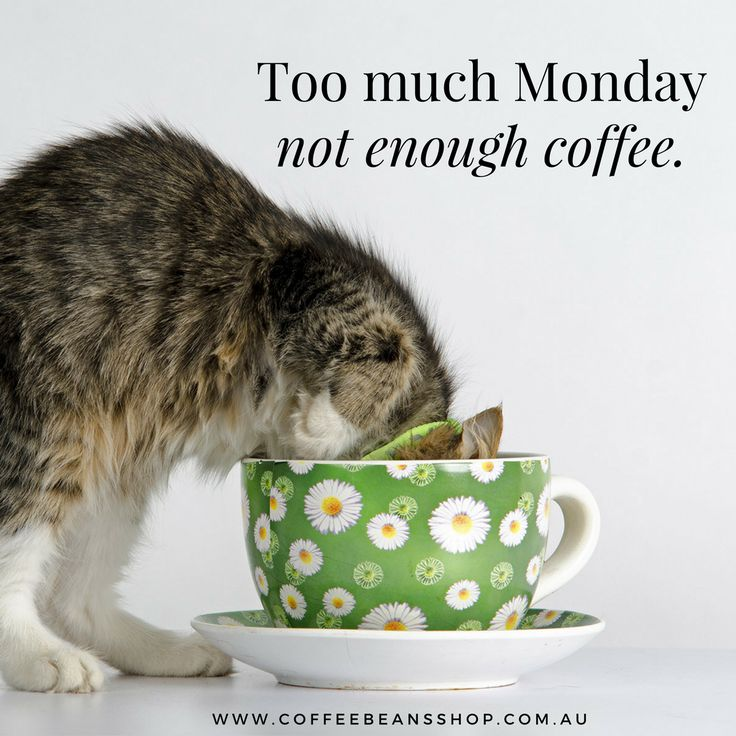 Kick start your Monday with our coffee beans delivered direct to you home or office. We even do auto-shipping so you never run out. Find out more here:  #coffeebeansshop #coffeesubscription #bestcoffee #coffeebeans #coffeequote #cat #coffeeinspiration #mondaycoffee #morningcoffee #coffeelove