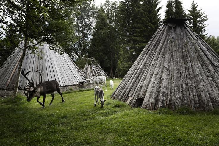 Njarka Sami camp is situated on a peninsular in Lake Häggsjön, Jämtland.