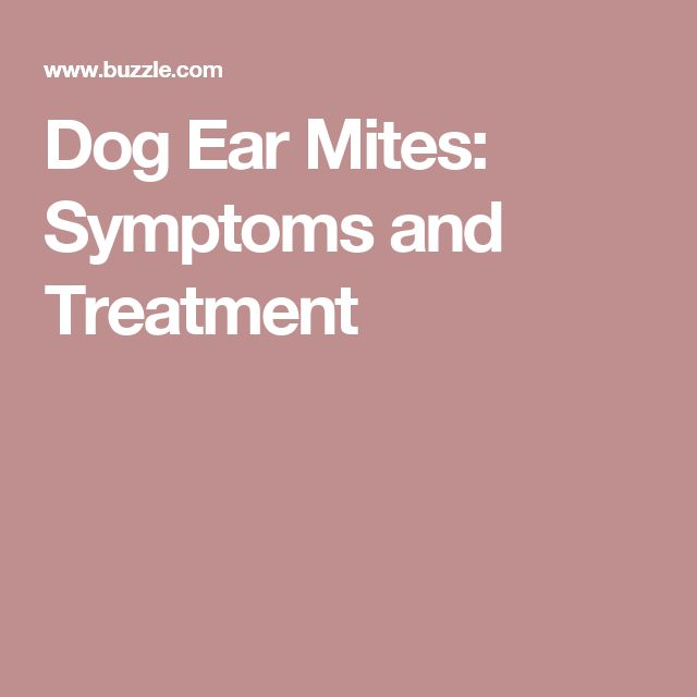 Dog Ear Mites: Symptoms and Treatment