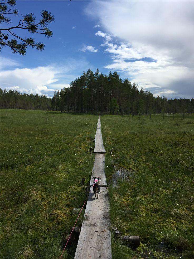 Tiilikkajärvi nationalpark. Hiking. Trekking. Uitonkierto. Patikointi. Retkeily. Finland