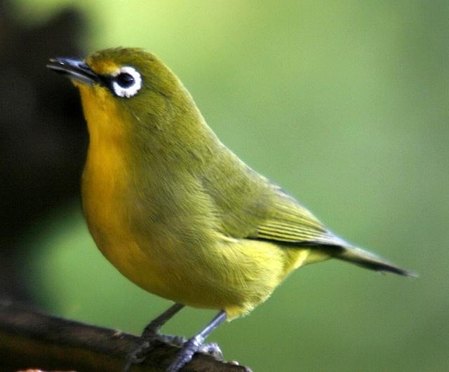 84 best birds creatures in my garden kwazulu natal. Black Bedroom Furniture Sets. Home Design Ideas