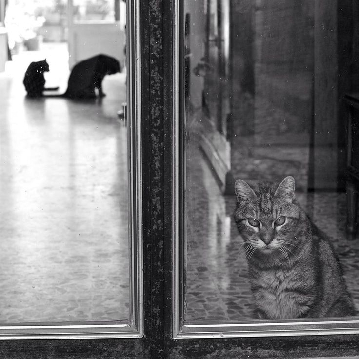 #cats #sabbioneta #italy #biancoenero #monochrome #mono #bnw #blackandwhite #blackandwhitephotography