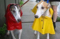 Fabricar un impermeable para el perro en cinco pasos | EROSKI CONSUMER. Una bolsa de plástico o un retal aislante de la lluvia pueden convertirse en una sencilla gabardina para el can
