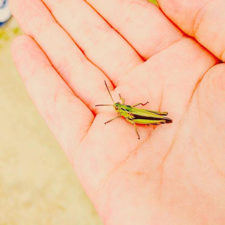 A.A.A. Grillo parlante cercasi!! Ho bisogno di molti buoni consigli !!    #grillo #cricket #nature #insetti #bugs #bugslife #bugstagram #grilloparlante #instanature #naturephotography #naturelovers #naturepic #instabug #instabugs #latergram #trentino #trentinoaltoadige #trentinodavivere #igersitaly #igersitalia #igerseurope #ig_italy #ig_europe #ig_italia #igers #valleaurina #inmyhands #nellemiemani