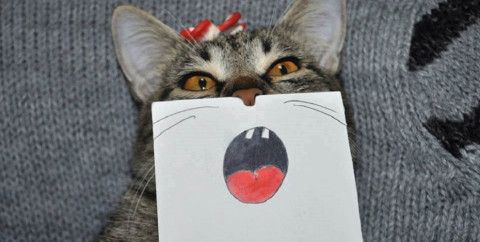 Patient cat models funny expressions drawn on paper by her owner
