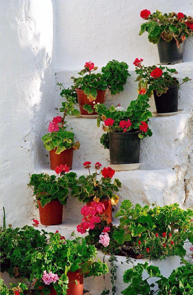 Flower Pots - Folegandros, Greece