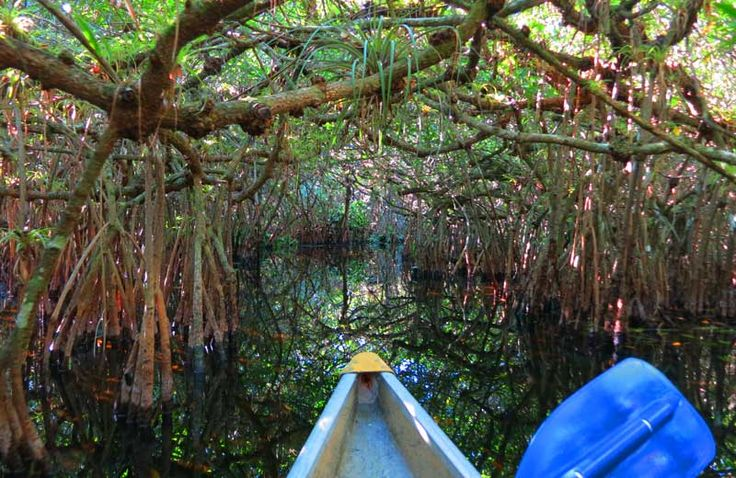 Turner River Kayak Trail. The best in the Everglades. On the sunniest day you are plunged into shadows on the Turner River Kayak Trail's mangrove tunnels.