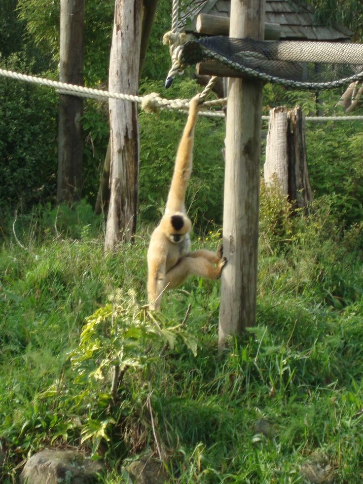 NZ zoo in Wellington