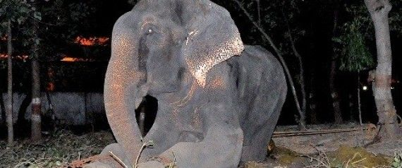 Elephant Cries After He Is Rescued Following 50 Years Of Abuse