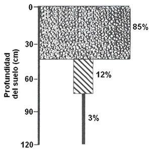 Descripción de las prácticas y las técnicas de riego por surcos y mediante Pivote central que pueden resultar útiles para los productores de frijoles y judías, tanto a los nuevos como a los experimentados. Mediante un riego aspersión adecuado, se alcanza un rendimiento por acre de hasta 1.100 kg de frijoles.