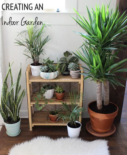 indoor gardeing