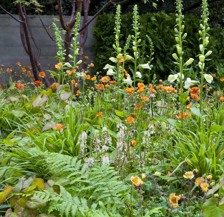 The planting scheme reflects the sponsor APCO's brand and includes a range of oranges with cream accents and fresh green foliage. Plants include Digitalis purpurea 'Dalmation White', Geum 'Totally Tangerine', Tiarella wherryii, Dryopteris filix-mas, Hakonechloa macra, Geum 'Beech House Apricot', epimedium 'Orange Koenigen', Geum 'Hannays'. Design by Ruth Willmott