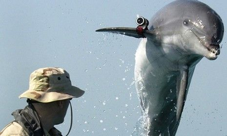 Interesting dolphin facts