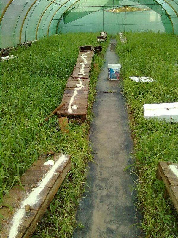 Invernadero granja experimental
