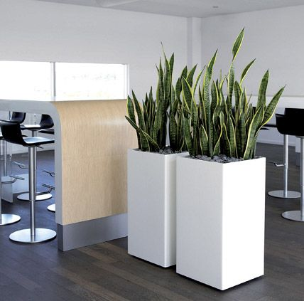 Structural Indoor Plant in square planters - super modern way to bring plants inside...