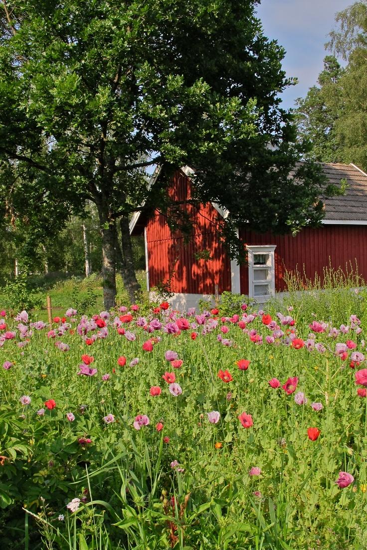 In Högsåra island, by Ritva Ikonen.