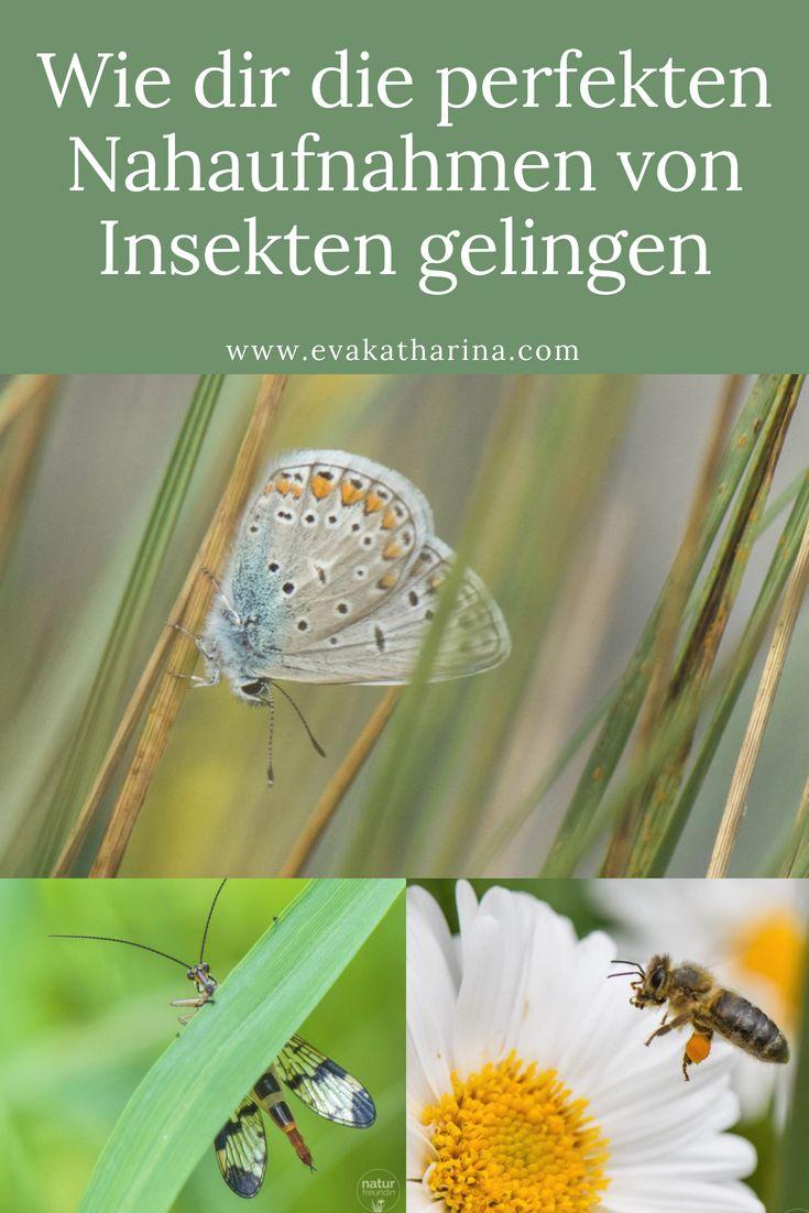Wie dir die perfekten Nahaufnahmen von Insekten gelingen