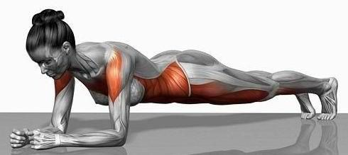 Plank muscles diagram. • Always keep good form, your back flat ...