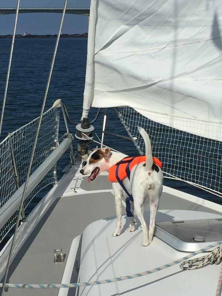 Sejlerhunden Trunte